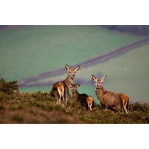 Come With Us To Exmoor photo of red deer