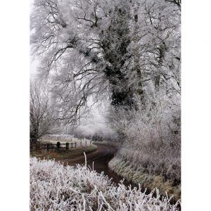 Frosty Lane photo on a cold winter morning