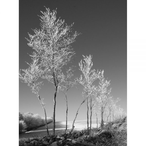 Reach For The Sky black and white photograph of winter frost on Exmoor