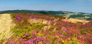 Exmoor In Summer the hills above Porlock