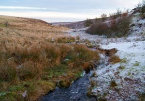 Frost At Nutscale Coombe on Exmoor