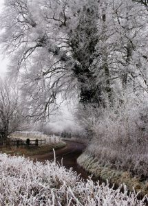 Frosty Lane At Tichbourne
