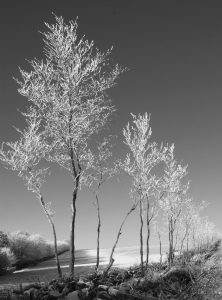 Reach For The Sky - Frost and snow on Exmoor