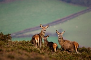 Come With Us To Exmoor wildlife photography by David