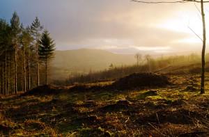 Morning Light On Exmoor