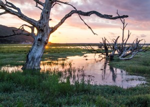 Sunset On Porlock Marsh landscape photograph on Exmoor