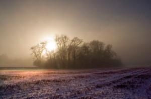 Tichborne Mist winter landscape photo